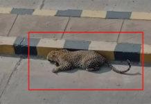 Cheetah was not found