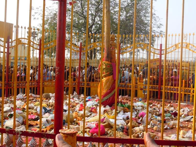 Telangana's Medaram Jathara begins